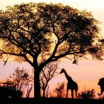 Safaris are Great in Africa, but not for your Workpaper Management Process!
